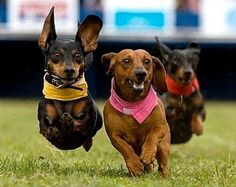 """Brown dog, """"Look how fast i can run!"""" Black dog, """"I can fly!"""" Black dog in back, """"Ooohhh, come on!"""""""