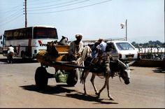 Egypt Donkeys, Egypt, Cart, Around The Worlds, Horses, Animals, Covered Wagon, Animales, Animaux