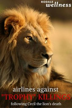 A surprising industry takes a stand in the wake of Cecil the lion's death. | Rodale Wellness.