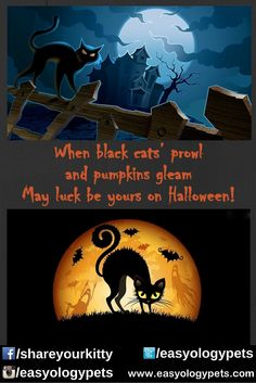 When black cats' prowl and pumpkins gleam, may luck be yours on Halloween.