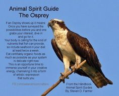 Animal Spirit Guide : The Osprey