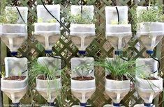 Milk jug planters for a vertical herb or flower garden. Use zip ties to attach to a trellis. Cap at the bottom can be opened to let out excessive rainwater. Plastic Milk Bottles, Plastic Bottle Planter, Jardim Vertical Diy, Vertical Garden Diy, Diy Planters, Garden Planters, Planter Ideas, Balcony Garden, Galvanized Planters