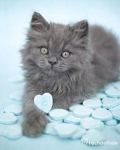 cats ♥ <3 https://www.pinterest.com/keymail22/animal-lovers/ <3 https://player.vimeo.com/video/113793930?autoplay=1 http://www.pinterest.com/keymail22