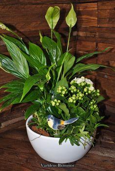 Plantering från Världens Blommor
