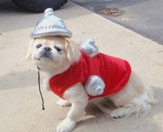 IM SO HOT I HAVE TO WEAR MY OWN FIRE HYDRANT
