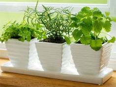 Think growing herbs indoors is difficult? Think again. Here's how in 3 simple steps!