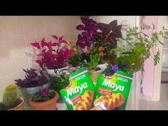 KURU MAYANIN Çiçeklere inanılmaz faydaları. ÇİÇEK COŞTURAN KURU MAYA TARİFİ. - YouTube Maya, Make It Yourself, Garden, Youtube, Plants, Blog, Florals, Recipes, Lawn And Garden