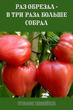 Gardening Tips, Vegetables, House, Ideas, Tips, Home, Vegetable Recipes, Thoughts