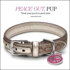 Dog collar. Maybe when she's full grown?! I die!