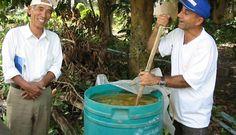 Calda Bordalesa, utilizada para combater pragas e doenças, como preparar e utilizar!