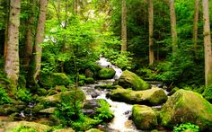 Forest Stream | Forest Stream wallpapers HD free - 315706