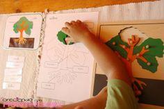 Botánica Montessori - El Árbol - Imprimibles Gratis - Creciendo con Montessori