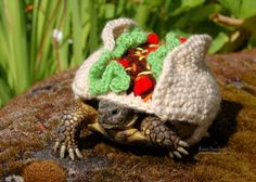 Hey, I found this really awesome Etsy listing at https://www.etsy.com/listing/166021418/taco-tortoise-cozy-made-to-order
