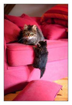 Oh you lucky kitties...