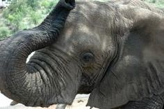 WildAid has been leading a campaign over the last few months to raise awareness about the illegal ivory trade in Africa