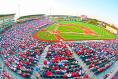 Cardinal Nation is born in Springfield. The St. Louis Cardinal's Double-A affiliate is located in town. Hammons Field is the perfect place to watch a game! Missouri Town, Midwest Vacations, Springfield Missouri, Cardinals Baseball, Travel And Tourism, In The Heart, The St, Get Outside, Perfect Place