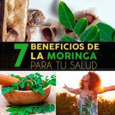 7 beneficios de la semilla de moringa para tu salud, mentiras y propiedades - La Guía de las Vitaminas Moringa Oleifera, Vitamins, Fruit, Pitaya, Herbalism, Natural Remedies, Plants
