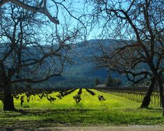 Winter in the Wine Country: A Getaway in Napa Valley from This Is My Happiness travel blog