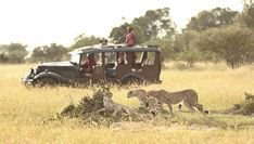 #KenyaSafariHolidays is established with the aim of creating tailor-made and luxury holidays. Know more @ http://kenya-safaris.co/on-safari/