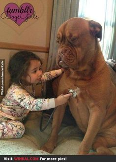 Little cute veterinarian