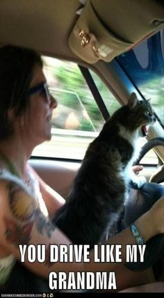 YOU DRIVE LIKE MY GRANDMA - LOLcats is the best place to find and submit funny cat memes and other silly cat materials to share with the world. We find the funny cats that make you LOL so that you don't have to. Funny Cat Memes, Memes Humor, Funny Cats, Funny Animals, Cats Humor, Humor Humour, Funny Horses, Wild Animals, Bts Memes