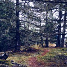 johannavos.com | Beautiful BC: A Tour of Vancouver Island Vancouver Island, Travel Guides, Tours, Plants, Beautiful, Plant, Planets