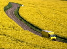 A yellow truck in a field of sunshiney flowers.