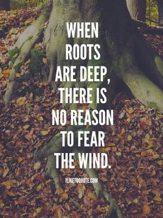 When roots are deep, there is no reason to fear the wind. #inspirational #life #trials