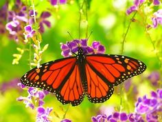 beautiful new butterfly pics | Beautiful butterfly desktops wallpapers