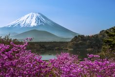 Lake Shojiko - Springtime by Natasha Pnini