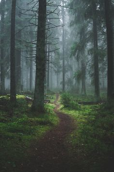 """thepisceanwitch: """" moody-nature: """"down to earth 