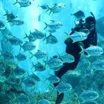 World's Largest Oceanarium | SG Summer, Summer Ideas & Tips