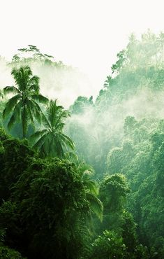 The rain forest? Or the Jungle? Maybe this is just a forest. Beautiful World, Beautiful Places, Beautiful Pictures, Beautiful Forest, Tropical Forest, Tropical Paradise, Amazon Rainforest, All Nature, Green Nature