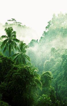 Massive Jungle