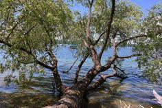 Idyllisches Plätzchen am Starnberger See - perfekt für einen #Romantikurlaub in #Bayern