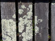 Mould on wooden fence outdoors