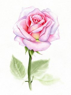 Original watercolors painted by me. Three different variations, similar frame style for all. cm Free - All About Watercolor Rose, Watercolour Painting, Floral Illustrations, Art Drawings, Rose Drawings, Drawing Flowers, Drawing Art, Botanical Art, Gouache