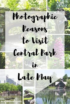 In case you needed a reason, here's photographic proof why you should Visit Central Park in Late May!