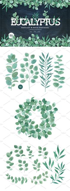 Eucalyptus leaves collection by adehoidar on @creativemarket