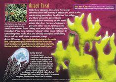Monster Book Of Monsters, Underwater Creatures, Wild Creatures, Marine Biology, Wedding Art, Blog Design, Tentacle, Education Quotes, Under The Sea