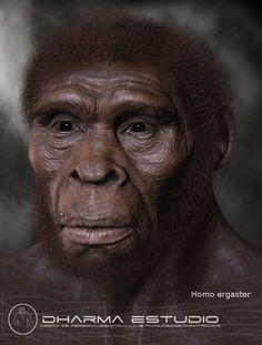 El Homo ergaster procede probablemente de Homo habilis y es descrito por algunos autores como el antecesor africano de Homo erectus. Algunos especialistas consideran que pueden haber sido una única especie, debido a su gran parecido anatómico, en cuyo caso tendría prioridad su denominación como Homo erectus, pero parece asentarse la aceptación de dos especies diferentes.
