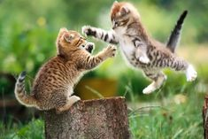 Two kittens, in Matrix-like bullet time