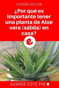 Aloe vera beneficios   ¿Por qué es importante tener una planta de Aloe vera (sábila) en casa?   Si la gente supiera, todo el mundo tendría una ... Lea y sepa ↓ ↓ ↓ ↓