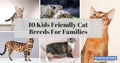 In this article you see and understand the ten kids friendly cat breeds for families. Best Cat Breeds, Dog Breeds, Cat Carrier, Beautiful Cat Breeds, Maine Coon, Mans Best Friend, Cat Toys, Cool Cats, Parenting Tips