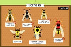 Lawn Bugs and Insects Guide - Manage Your Yard Insect Repellent Plants, Bugs And Insects, Garden Care, Lawn And Garden, Ladybug, Bees, Yard, Image, Gardening