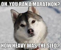 Brilliant! #Funny #Running #Marathon #Comedy