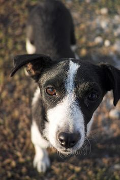Boston Terrier, Wordpress, Dogs, Animals, Cats, Pet Dogs, The Great Outdoors, Animales, Boston Terriers