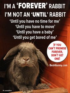 The types of people who shouldn't get a pet rabbit! Bunny Rescue, Prey Animals, Funny Animals, Cute Animals, Netherland Dwarf, Bunny Care, Animal Magic, Types Of People, Funny Bunnies