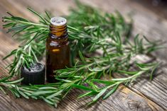 Rosemary is one of the most aromatic and pungent herbs around, here are 20 creative ways to use this wonderful versatile herb and not just in delicious tasting recipes. Essential Oil Roll Ons, Best Essential Oils, Rosemary Plant, How To Dry Rosemary, Essential Oils For Breathing, Homemade Shampoo, Homemade Conditioner, Kraut, Essential Oil Uses