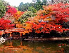 CMYK - A World Of Colour: CMYK - A world of Colour - Daigo-ji temple, Kyoto, Japan